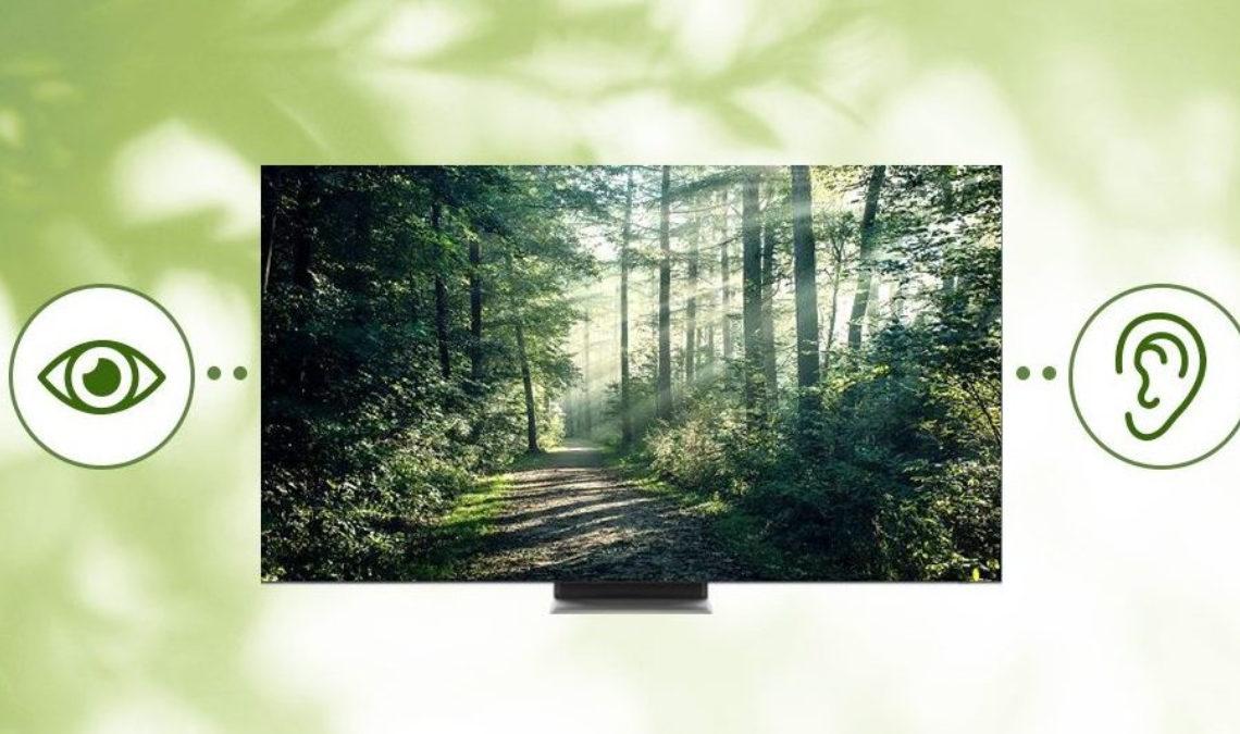Imagen que combina fotografía y elementos gráficos sobre un fondo blanco con verde que simula vegetación. En el centro de la imagen está una pantalla de televisión donde se muestra un bosque, con un camino central y entre árboles de cuelan los rayos del sol. Del lado derecho de pantalla está un círculo verde donde se ve el dibujo de un ojo, y del lado izquierdo, otro círculo con una oreja.