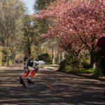 Fotografía del robot Cassie en compañía de un hombre de espaldas en medio de un camino arbolado. Cassie es un robot bípedo que rompió una marca de 5 kilmetros que recorrió de forma autónoma. En la imagen se aprecian las extremidades inferiores de Cassie en color rojo y negro, en posición de correr.